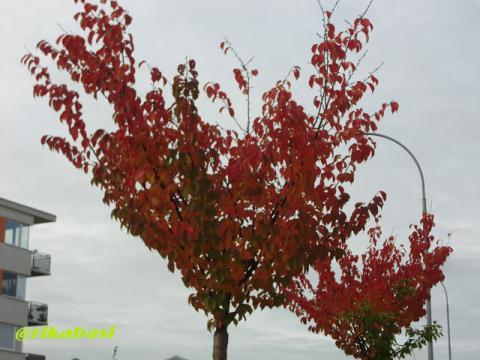 CIMG9403_20121005231334.jpg