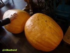 CIMG9519_20121011070626.jpg