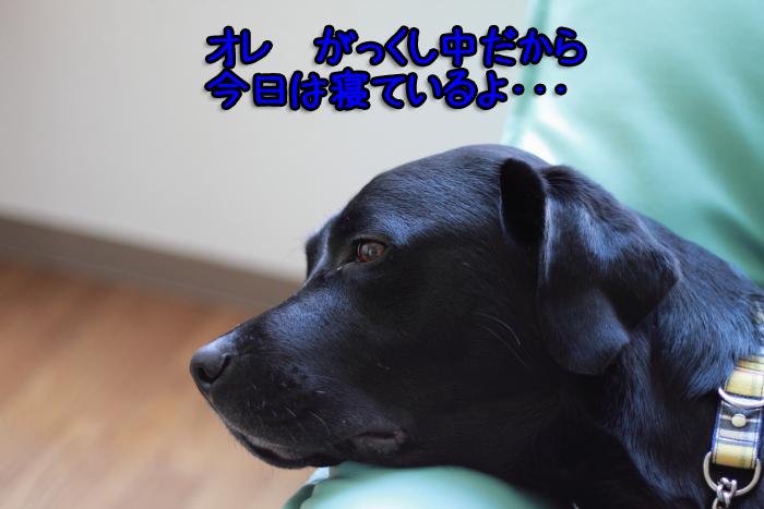 20110925-003.jpg