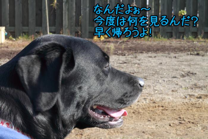 20111012-009.jpg