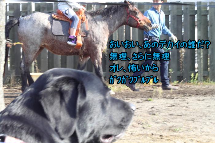20111012-010.jpg