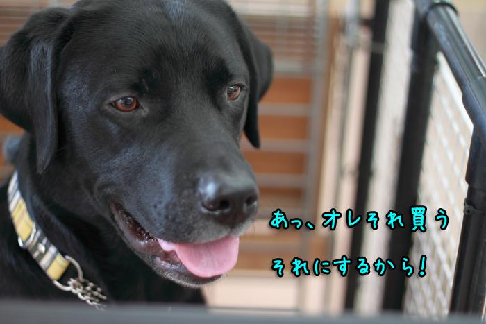 20111029-010.jpg