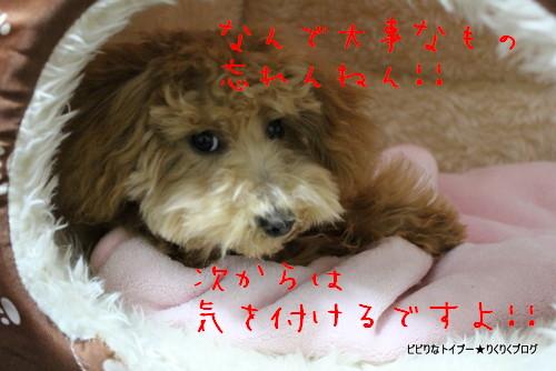 2-IMG_0594.jpg