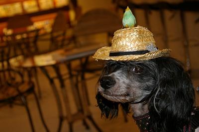 龍馬の帽子2