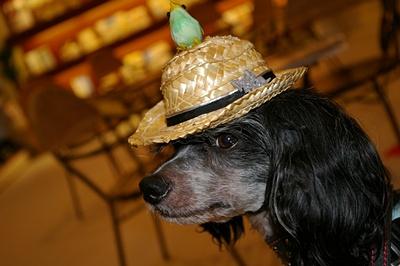 龍馬の帽子