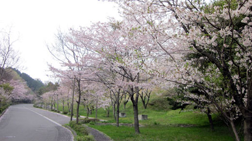 20110416桜