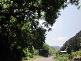 20110520高縄山2