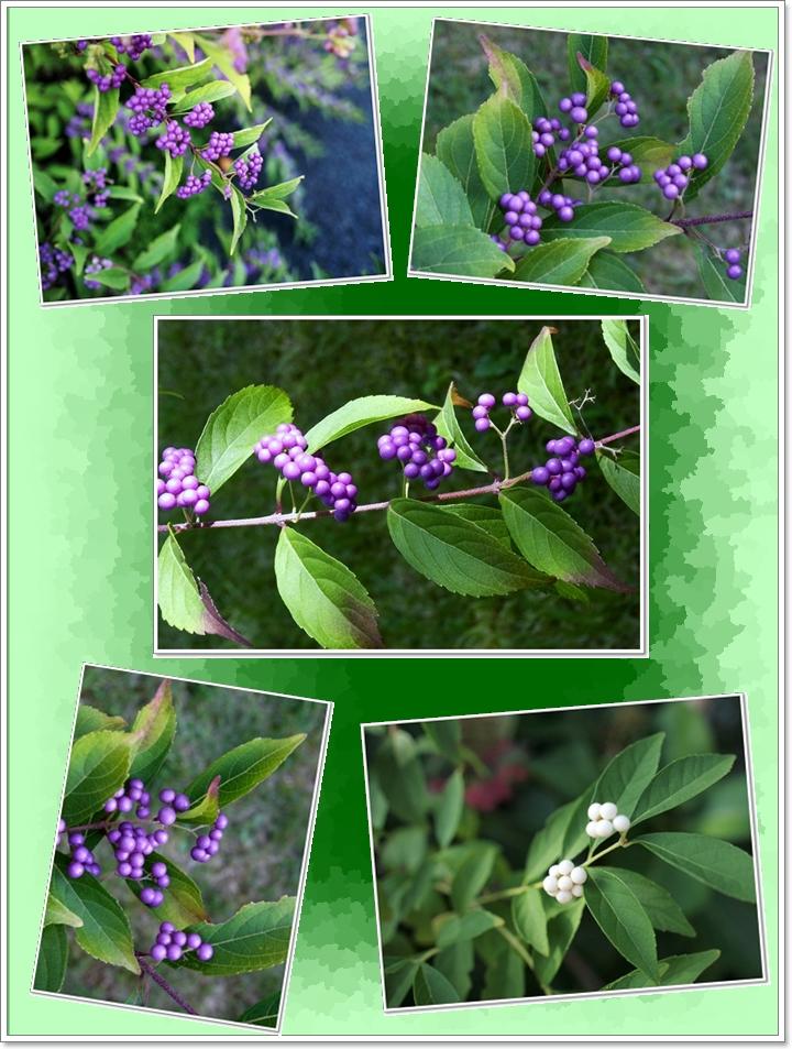 700933緑小紫3