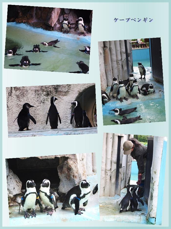 700933ブルー②ペンギン2