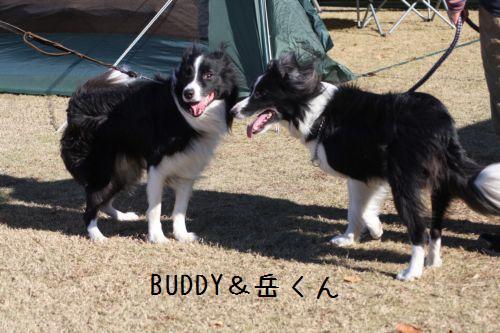 IMG_0004-buddy-gaku.jpg
