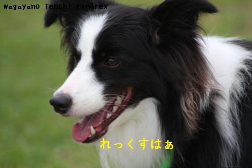 IMG_0023REX.jpg