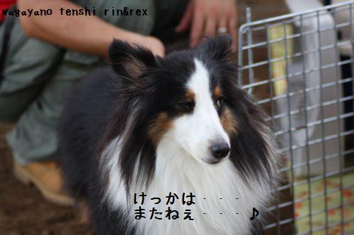 IMG_0035rinchan.jpg