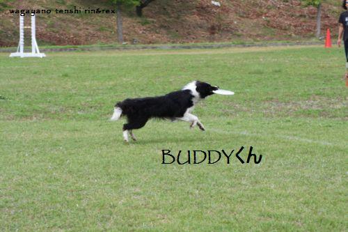IMG_0039-buddy.jpg
