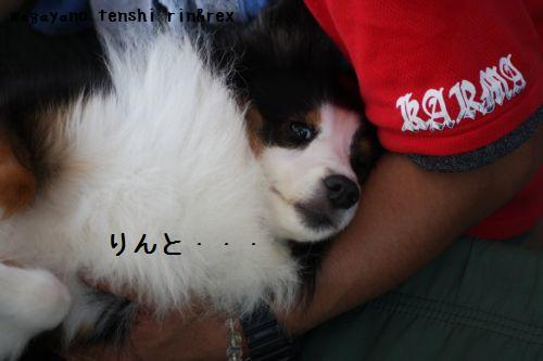IMG_0057rinchan.jpg