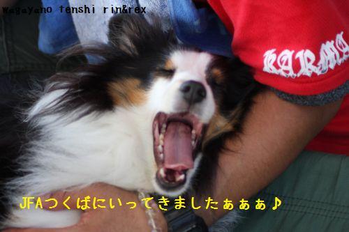 IMG_0060rinchan.jpg