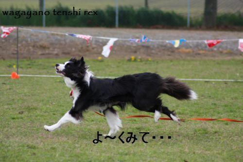 IMG_0067reku.jpg