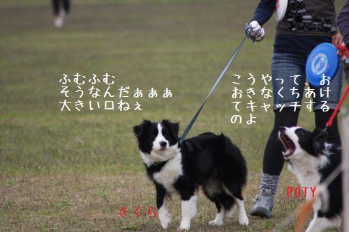 IMG_0105potysakura.jpg