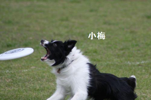 IMG_0111umechan.jpg