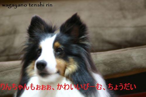 IMG_6711.jpg