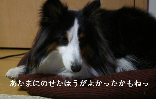 IMG_8259.jpg