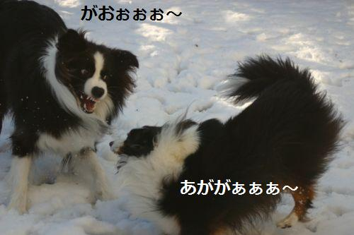 IMG_9326.jpg