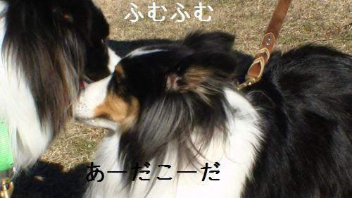 PIC_0071.jpg