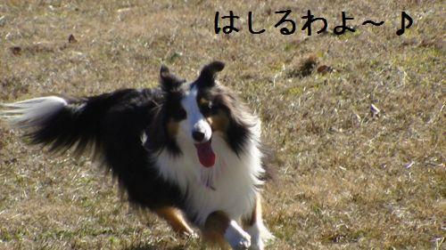 PIC_0084.jpg