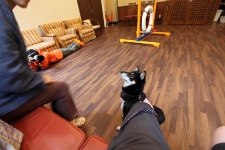 わんパラ飛行犬12