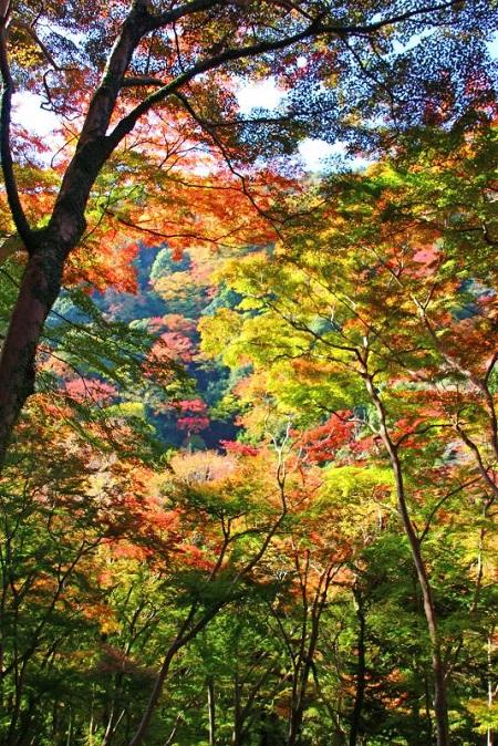 みのお大滝9