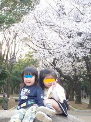 桜2013③
