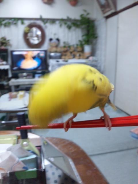 pちゃんお箸