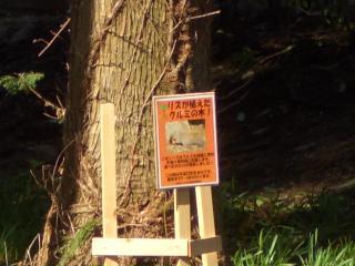 02リスが植えたクルミの木