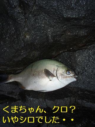 2012クロ釣り王者22