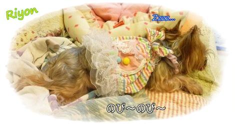 おやすみ②