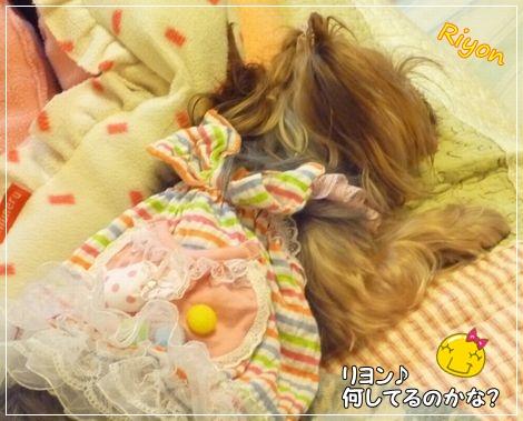 おやすみ①