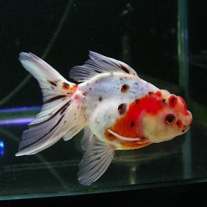yoshiokaazuma17.jpg
