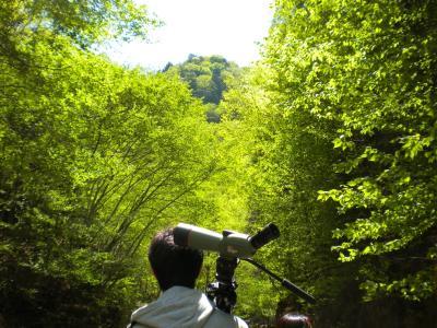 oowakasawa2_convert_20110520124856.jpg