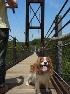 吊り橋わたったよ