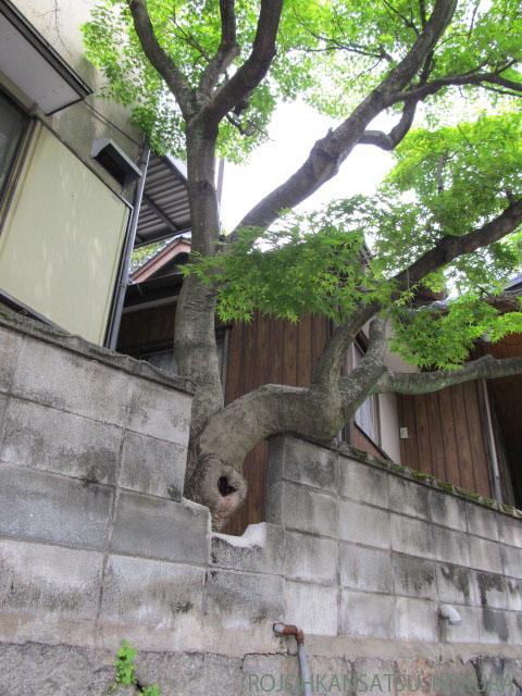 佐々木のじいさん2