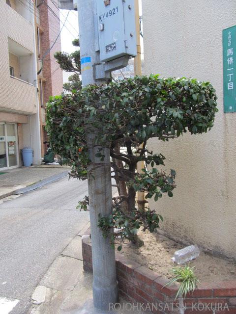 馬借の木 2