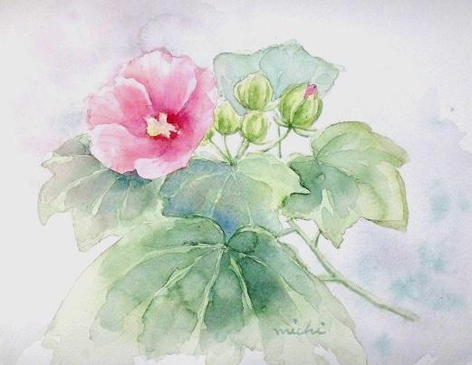 ふようの花2013