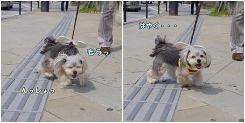 お散歩①②