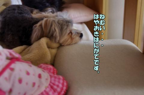 寝ボスケ②