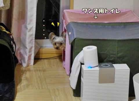 トイレアピール①