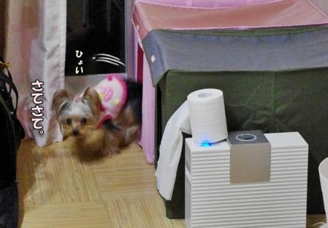 トイレアピール②