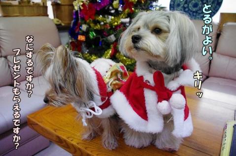 クリスマス撮影①