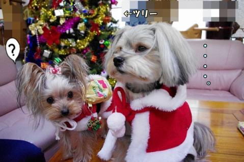 クリスマス撮影⑨