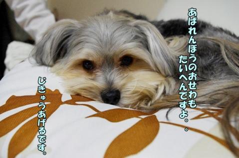 犬種と性格①