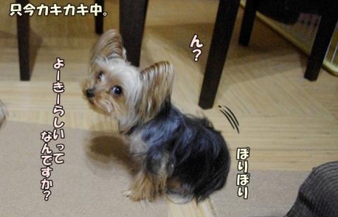 犬種と性格②