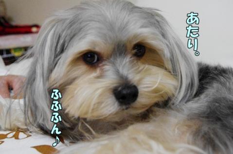 犬種と性格③